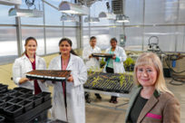 Applied science doctoral students, with Dr. Mariya Khodakovskaya, right, researching the heat tolerance of rice.