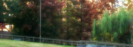 fall scene at UALR, trees and bridge