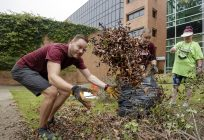 Photo of ITS CIO Thomas Bunton tossing a dead bush out of a landscape area during the ITS campus cleanup workday.