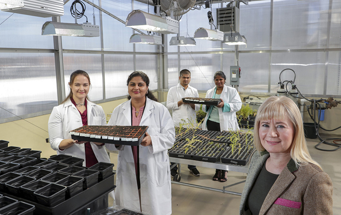 Applied science doctoral students, with Dr. Mariya Khodakovskaya, right, are researching the heat tolerance of rice Students are from rleft, Diamond McGehee, Zoya Faruqui, Kamal Pandey and Sudha Shanmugam.