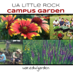 Visit the Campus Garden website to order some plants during the Spring 2020 Plant Sale.