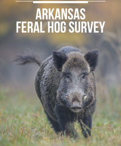 The cover of the survey on feral hogs in Arkansas.