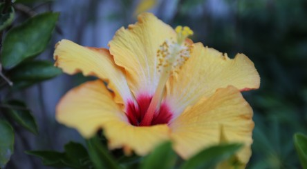 Flower with yellow petals