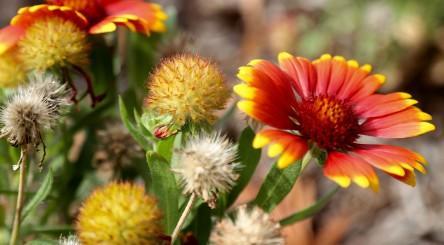 UALR flower