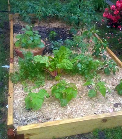 Register for free garden training
